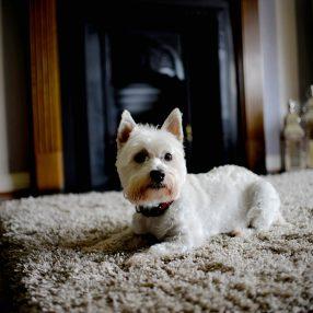 CabinCareWNC.com | Pet & House Sitting